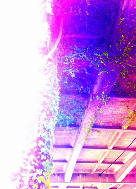 p_2048_1475_EC1EEB72-A816-4E49-B18C-34C8192A6176.jpeg