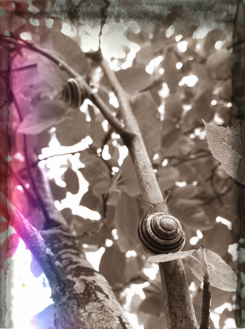 20120521-224124.jpg